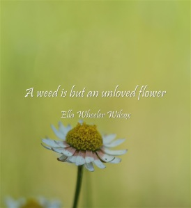 quote A weed is but an unloved flower Ella Wheeler Wilcox