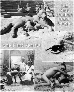 feral children amala-and-kamala