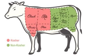 Kosher Cow